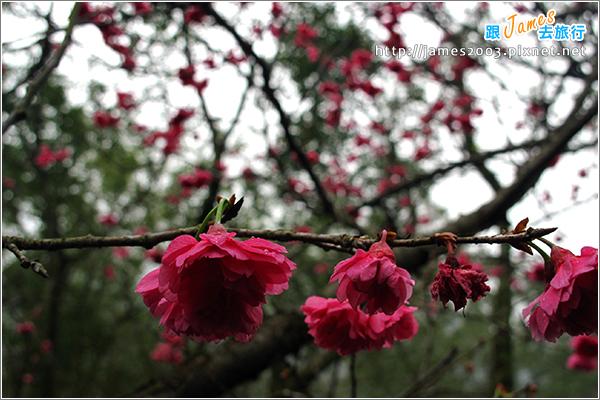 [台北] 大板根森林溫泉渡假村04