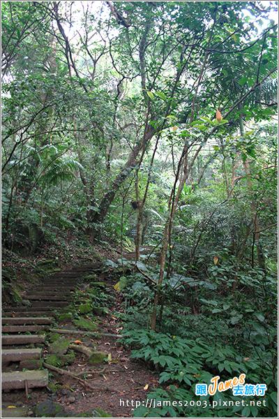 [台北] 大板根森林溫泉渡假村06