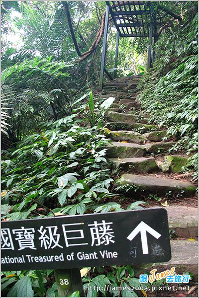[台北] 大板根森林溫泉渡假村08