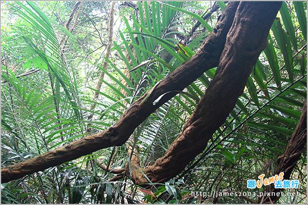[台北] 大板根森林溫泉渡假村09
