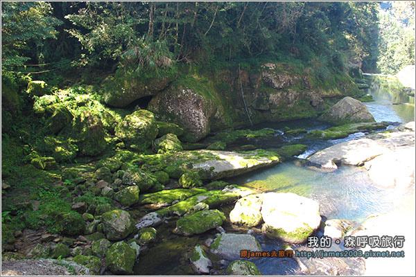 [南投景點] 我的森呼吸旅行-杉林溪07.JPG