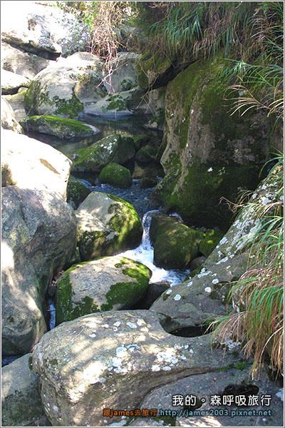 [南投景點] 我的森呼吸旅行-杉林溪08.JPG