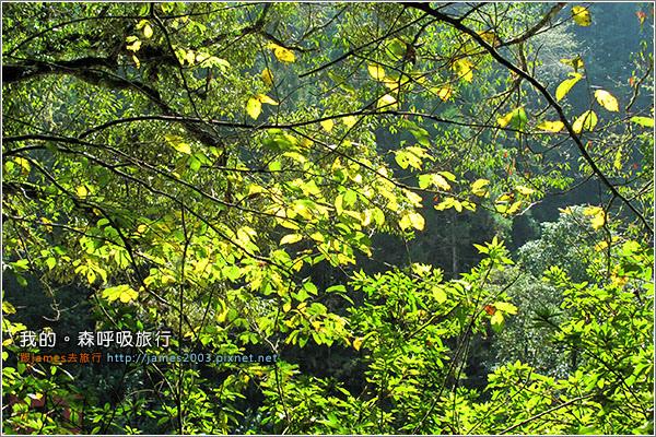 [南投景點] 我的森呼吸旅行-杉林溪10.JPG
