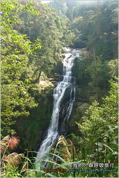 [南投景點] 我的森呼吸旅行-杉林溪11.JPG