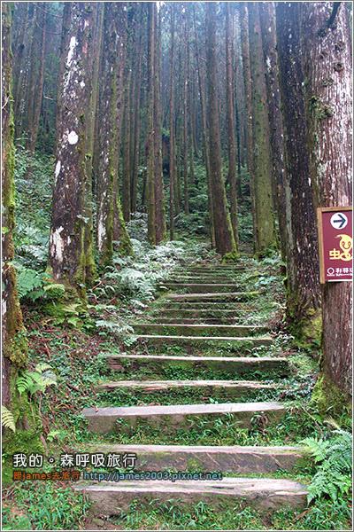 [南投景點] 我的森呼吸旅行-杉林溪23.JPG