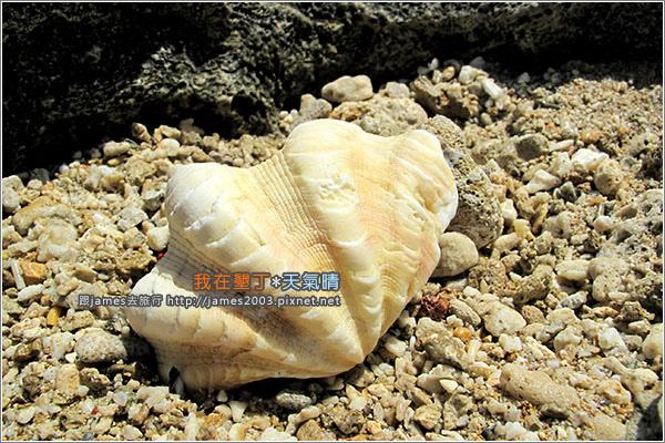 [墾丁景點] 貝殼砂的天堂-砂島(貝殼砂展示館)017