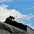 [雲林景點] 虎尾頂溪社區「屋頂上的貓」貓彩繪村08.JPG