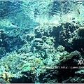【沖繩之旅】海洋博公園-沖繩美麗海水族館09.JPG