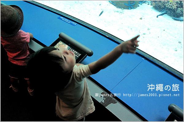 【沖繩之旅】海洋博公園-沖繩美麗海水族館10.JPG