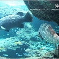 【沖繩之旅】海洋博公園-沖繩美麗海水族館11.JPG