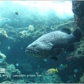 【沖繩之旅】海洋博公園-沖繩美麗海水族館12.JPG