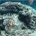 【沖繩之旅】海洋博公園-沖繩美麗海水族館13.JPG