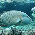 【沖繩之旅】海洋博公園-沖繩美麗海水族館14.JPG