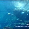 【沖繩之旅】海洋博公園-沖繩美麗海水族館15.JPG