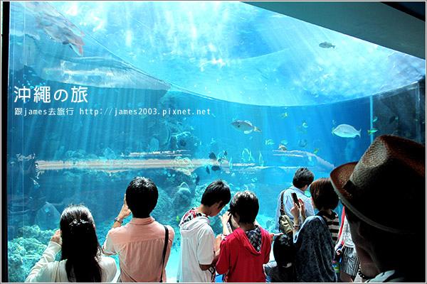 【沖繩之旅】海洋博公園-沖繩美麗海水族館16.JPG