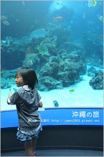 【沖繩之旅】海洋博公園-沖繩美麗海水族館17.JPG