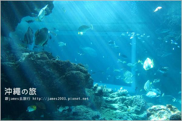 【沖繩之旅】海洋博公園-沖繩美麗海水族館18.JPG
