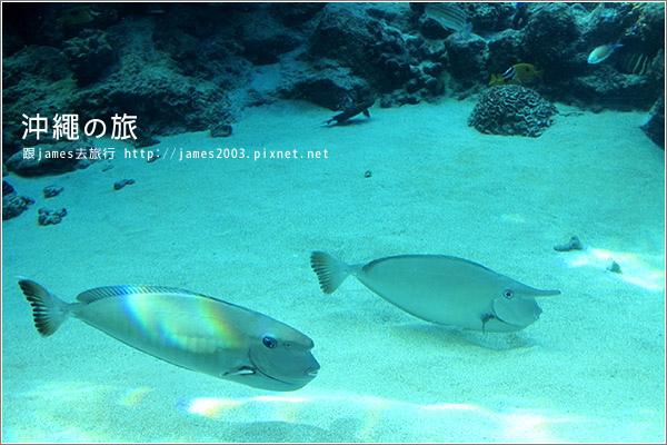 【沖繩之旅】海洋博公園-沖繩美麗海水族館19.JPG
