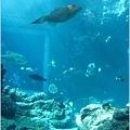 【沖繩之旅】海洋博公園-沖繩美麗海水族館21.JPG