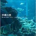 【沖繩之旅】海洋博公園-沖繩美麗海水族館20.JPG