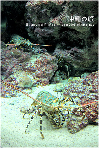 【沖繩之旅】海洋博公園-沖繩美麗海水族館22.JPG