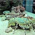 【沖繩之旅】海洋博公園-沖繩美麗海水族館23.JPG