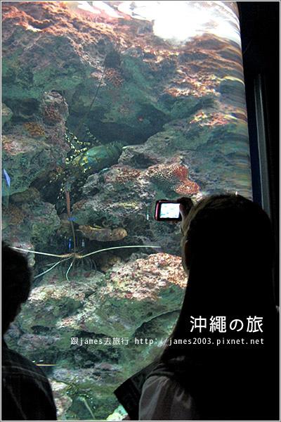 【沖繩之旅】海洋博公園-沖繩美麗海水族館24.JPG