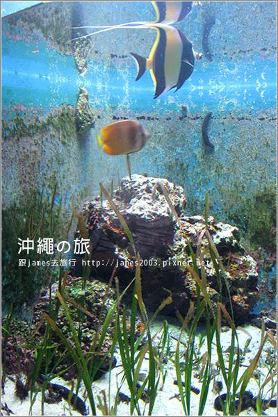 【沖繩之旅】海洋博公園-沖繩美麗海水族館26.JPG