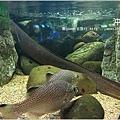 【沖繩之旅】海洋博公園-沖繩美麗海水族館28.JPG