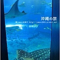 【沖繩之旅】海洋博公園-沖繩美麗海水族館30.JPG