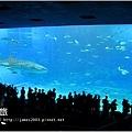 【沖繩之旅】海洋博公園-沖繩美麗海水族館31.JPG