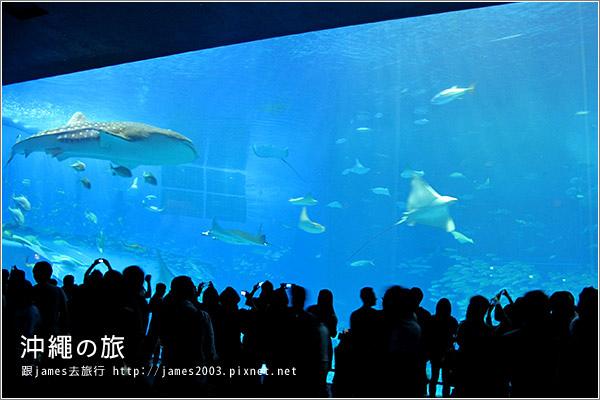 【沖繩之旅】海洋博公園-沖繩美麗海水族館32.JPG