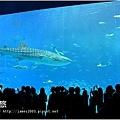 【沖繩之旅】海洋博公園-沖繩美麗海水族館33.JPG