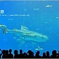 【沖繩之旅】海洋博公園-沖繩美麗海水族館34.JPG