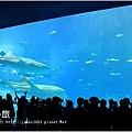 【沖繩之旅】海洋博公園-沖繩美麗海水族館35.JPG