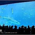 【沖繩之旅】海洋博公園-沖繩美麗海水族館36.JPG