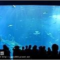 【沖繩之旅】海洋博公園-沖繩美麗海水族館37.JPG