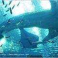 【沖繩之旅】海洋博公園-沖繩美麗海水族館38.JPG