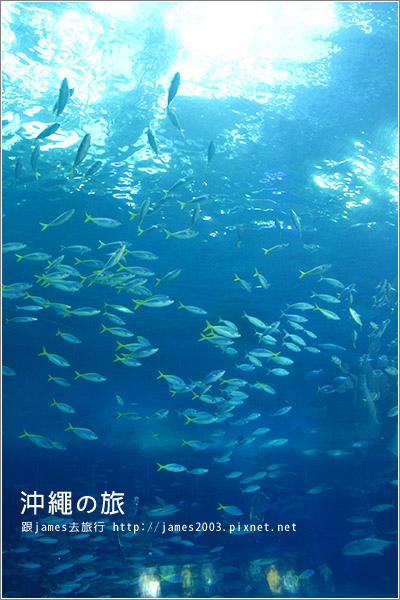 【沖繩之旅】海洋博公園-沖繩美麗海水族館39.JPG