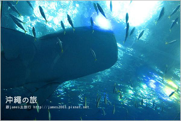 【沖繩之旅】海洋博公園-沖繩美麗海水族館40.JPG