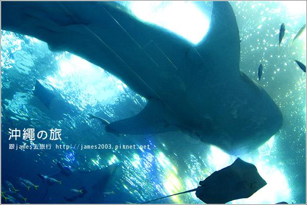 【沖繩之旅】海洋博公園-沖繩美麗海水族館41.JPG