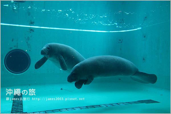 【沖繩之旅】海洋博公園-沖繩美麗海水族館42.JPG