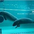 【沖繩之旅】海洋博公園-沖繩美麗海水族館43.JPG