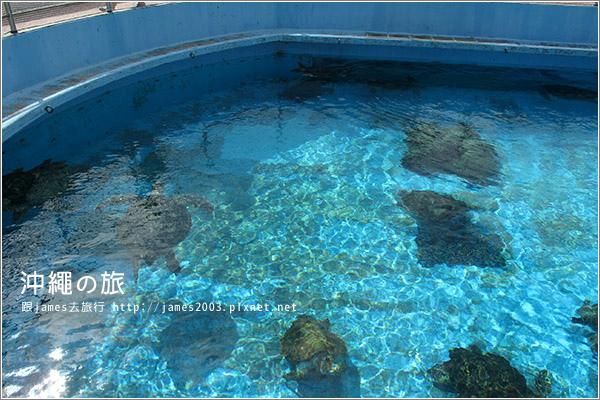 【沖繩之旅】海洋博公園-沖繩美麗海水族館47.JPG