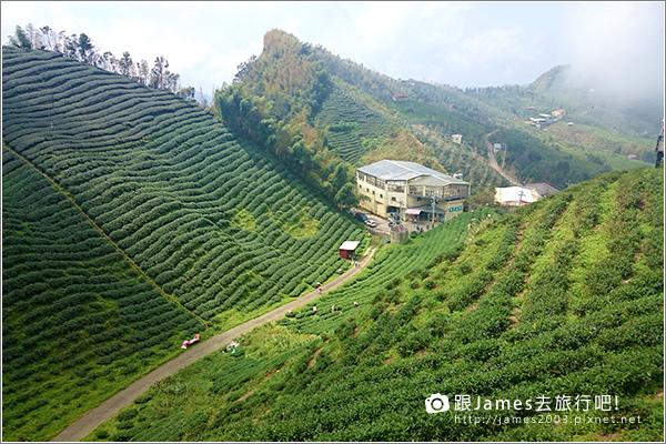 【南投旅遊】銀杏森林、大崙山茶園觀景台 06.JPG