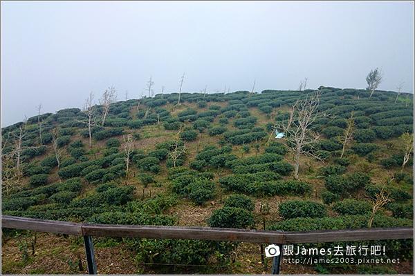 【南投旅遊】銀杏森林、大崙山茶園觀景台 09.JPG