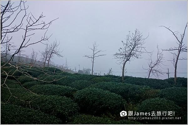 【南投旅遊】銀杏森林、大崙山茶園觀景台 10.JPG