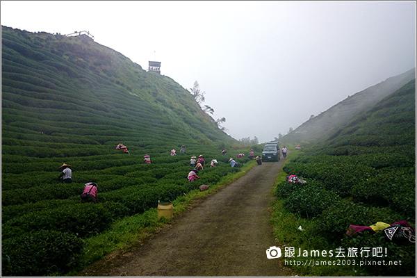【南投旅遊】銀杏森林、大崙山茶園觀景台 14.JPG