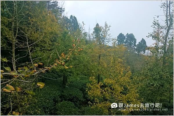 【南投旅遊】銀杏森林、大崙山茶園觀景台 12.JPG