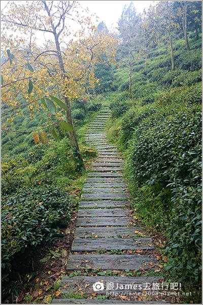 【南投旅遊】銀杏森林、大崙山茶園觀景台 13.JPG